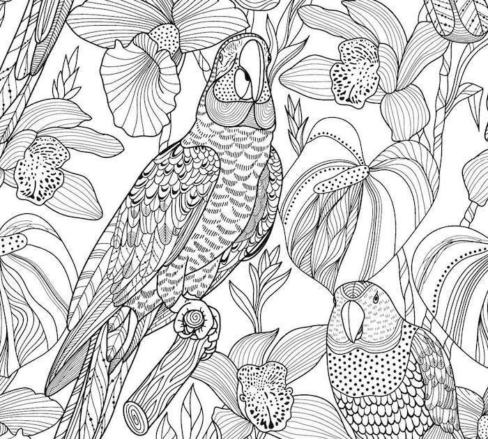 ausmalbilder erwachsene vogel