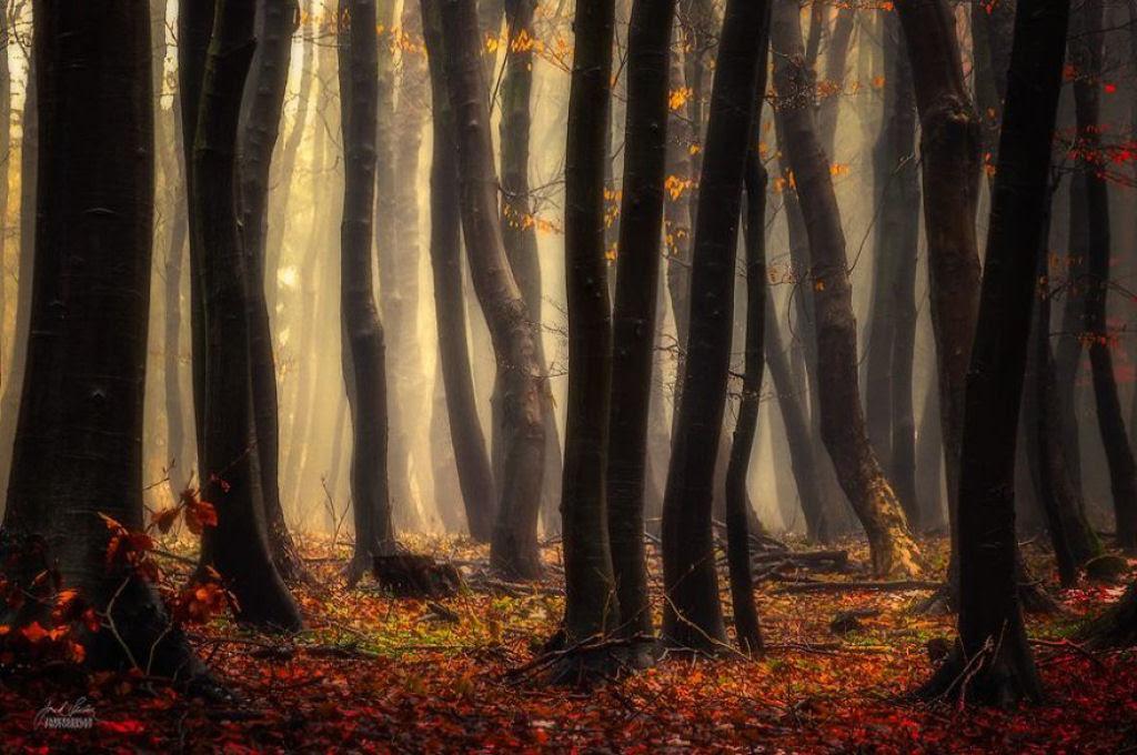 Os bosques outonais oníricos de um fotógrafo tcheco 19