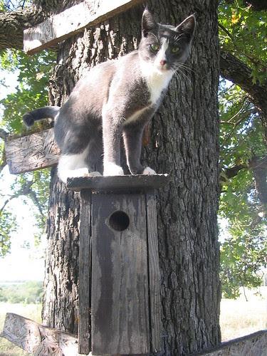 Cat on bird house