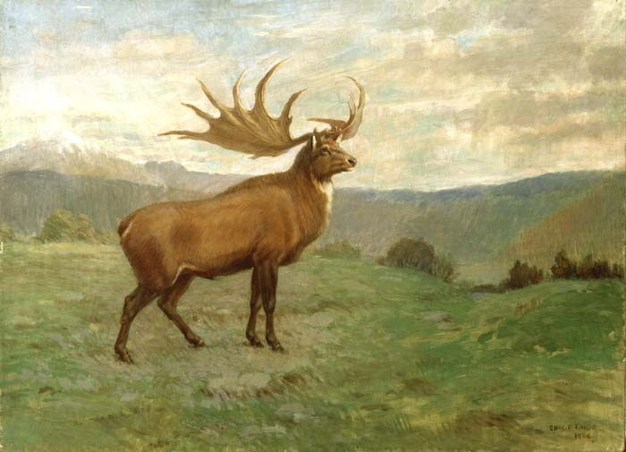 Wikimedia Commons 4