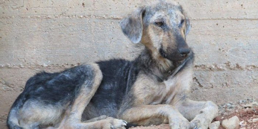 Sign Petition: Demand an End to the miserable life and to tragic death of Loutraki garbage dump dogs