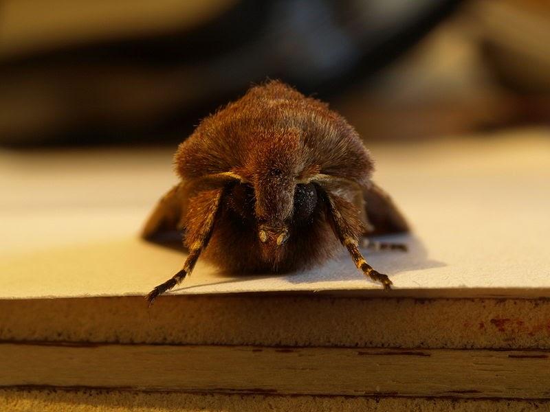 Motte In Der Küche