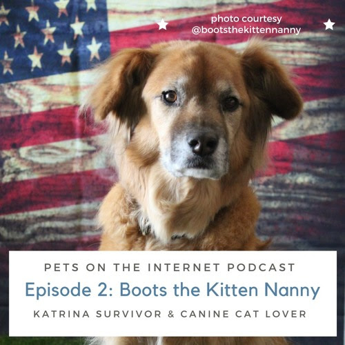 Episode 2: Boots, the Kitten Nanny by Pets From The Internet