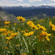 Where RV Now? Flora and Fauna of Yellowstone