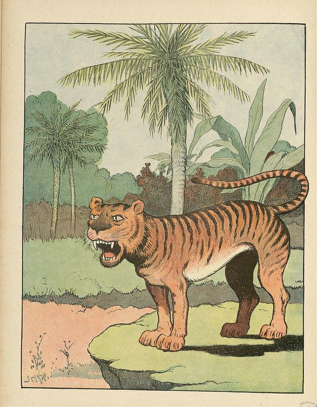 coloured illustration of tiger