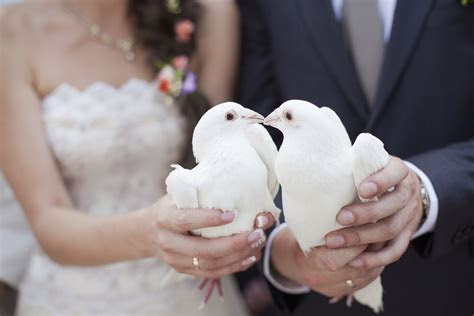All you need to know about a wedding dove release   Easy