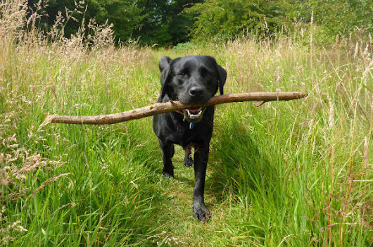 Digs for Dogs in Bolton, county Lancashire | Dog Walkers