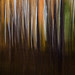 Colorful Aspen in Motion
