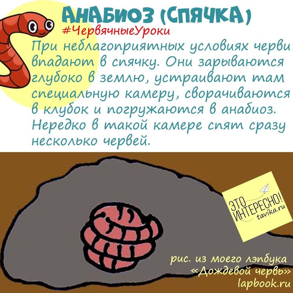 анабиоз дождевого червя