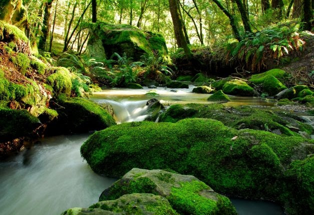 mossy river