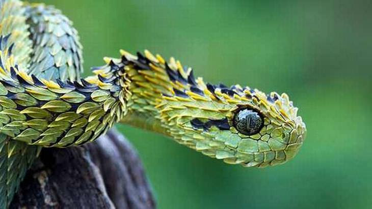 Deslumbrantes Flagrantes da Vida Selvagem