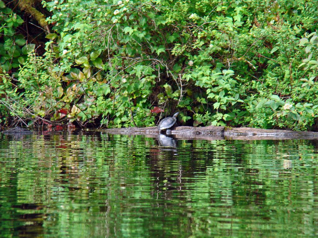 2010-06-07 Thetis Lake 031