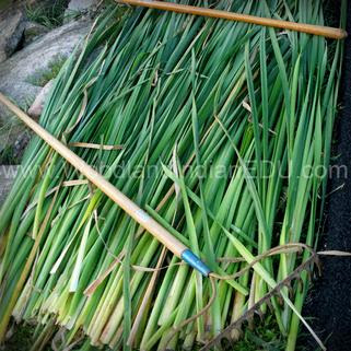 how to make a cattail mat