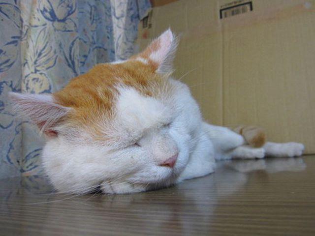 The Laziest Cat in the World (25 pics)
