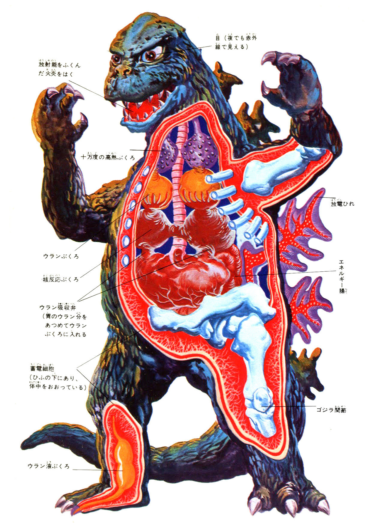 Godzilla - Anatomical Painting
