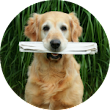 Own A Franchise | Snaggle Foot Dog Walks & Pet Care