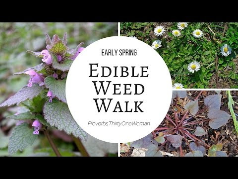 Early Spring Edible Weed Walk