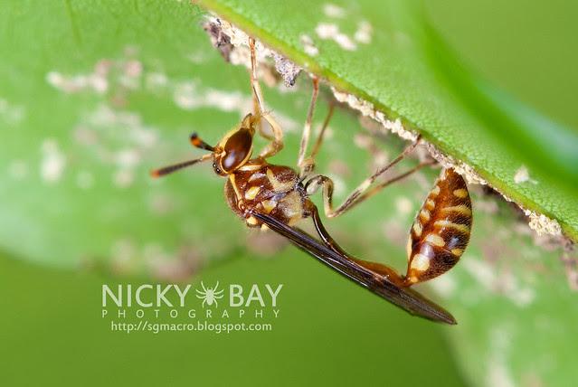 Wasp (Aprocrita) - DSC_6895