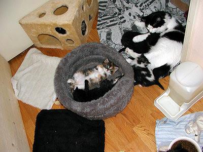 de kittenrelaxruimte