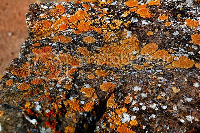 Lichen on An Ancient Rock