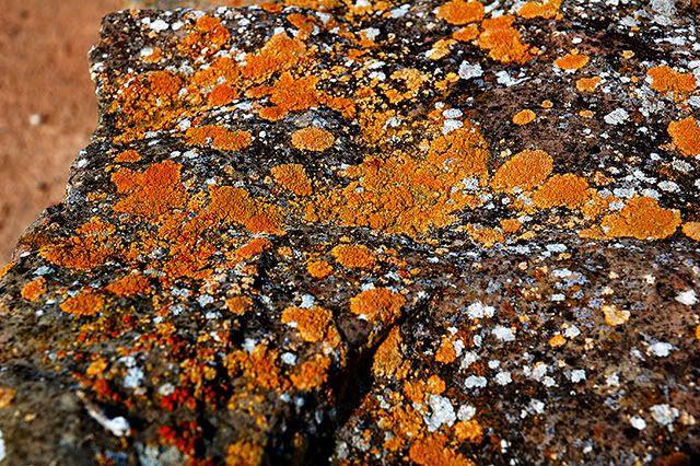 Lichen on An Ancient Rock