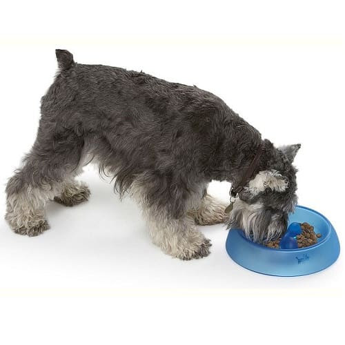 Slow Eating Dog Bowl – Eat Better Bowl