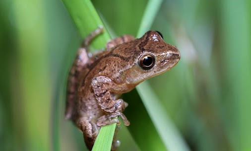Did you know the entire month of April is #NationalFrogMonth? We missed this important fact! #frogs ...