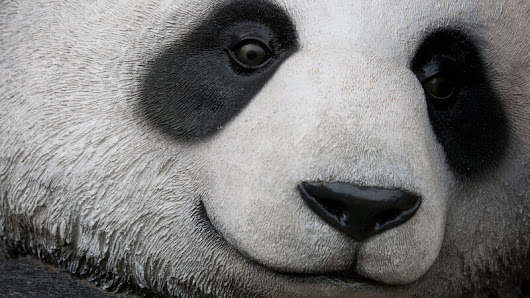 🐼 Google Panda Update | Search Engine Land Explains the Google Panda Filter