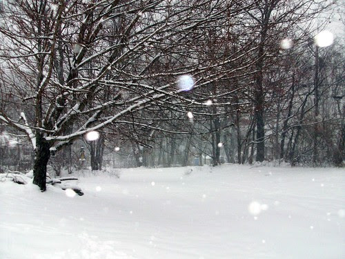 Snow_12909