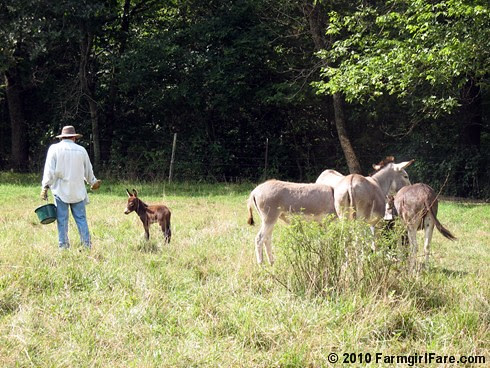 Joe and donkeys 2