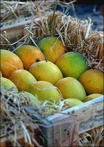 MangoSeason1