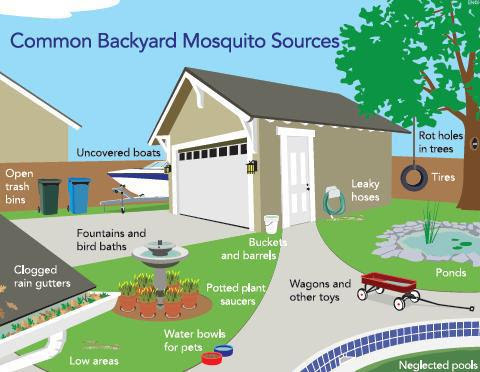 Mosquito Control Awareness week is coming up, how aware are you?