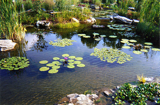 Riverdale Pond Supply & Treatment – Canadian Pond Supply
