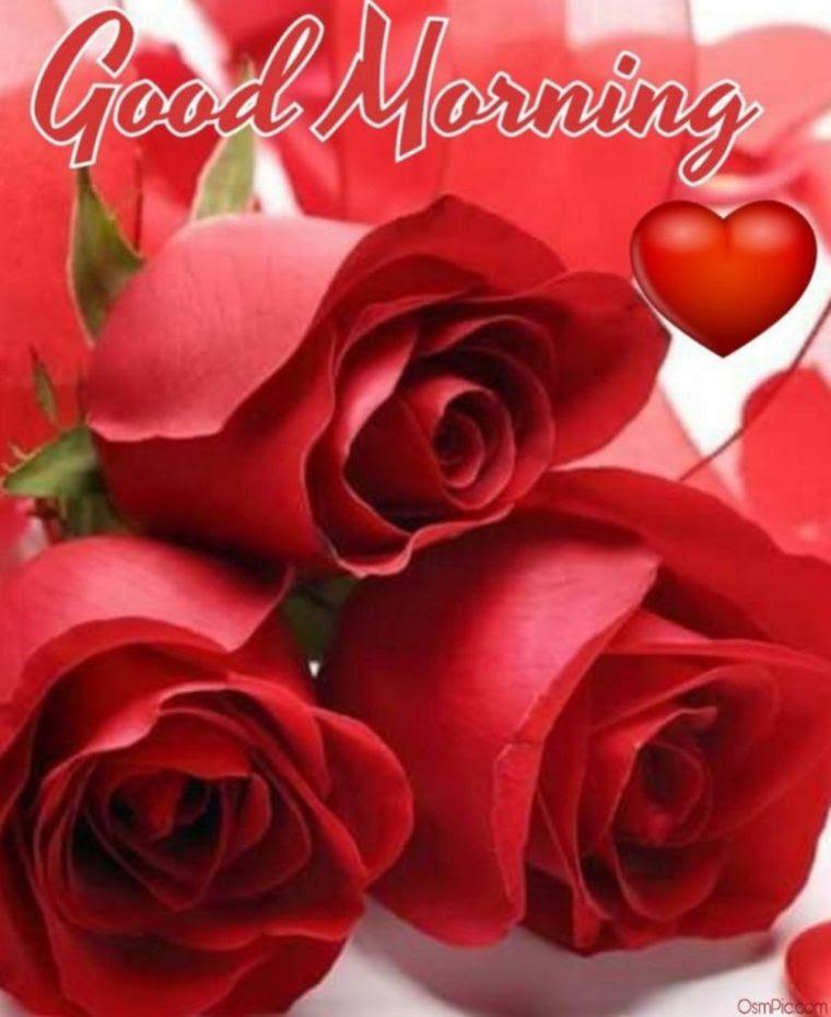 Red Rose Images Love Hd Good Morning Floweryred2com