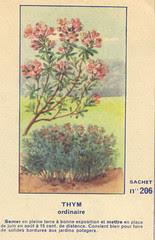 legume206 thym