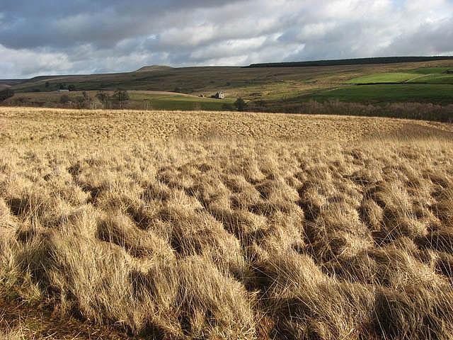 File:Rough grazing at Rashiel Sike - geograph.org.uk - 680020.jpg