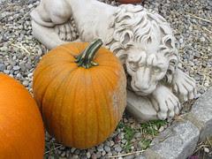 An October Farm Day! 11