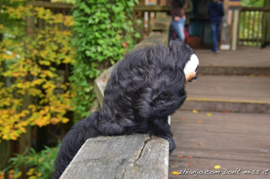 White-faced Saki - Zhianjo.com Don't Miss It!!