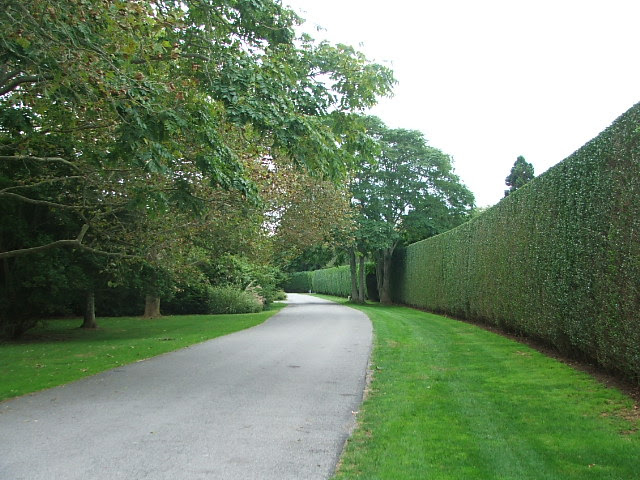 East Hampton Hedgerows