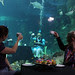 Sydney Aquarium Mad Hatters Tea Party