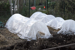 frost protected garden 020