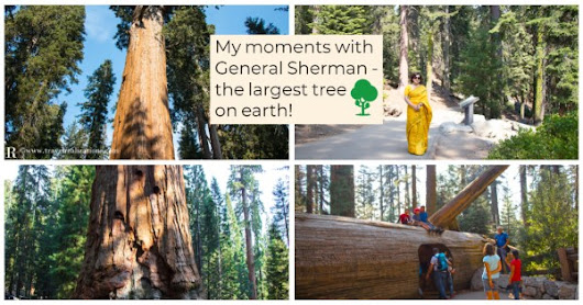 My moments with General Sherman - The largest tree on earth! -...