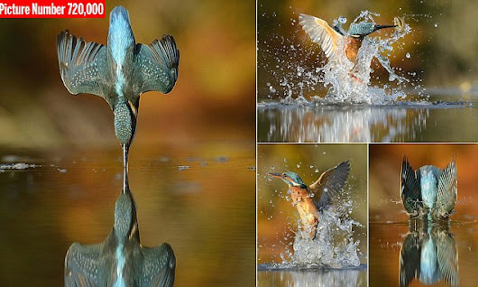 Photographer takes perfect snap of kingfisher after 6 years trying