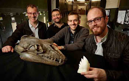 Fossil whales' teeth shows what ferocious predators they were | Geology Page