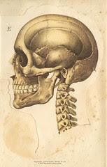 anatotete 5
