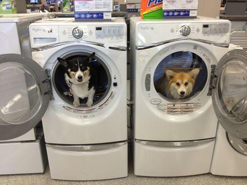 Σκυλακια που... μοσχοβολανε