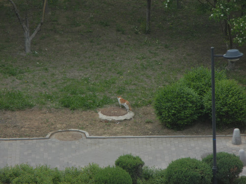 Cats in Shenyang, China _ 9103
