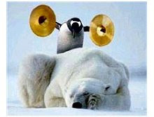 Urso Pinguim