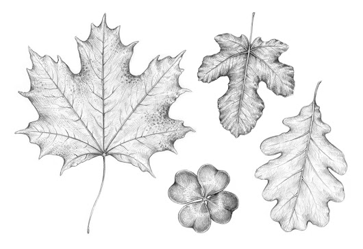 How to Draw a Leaf – New Tutorial on Envato Tuts+