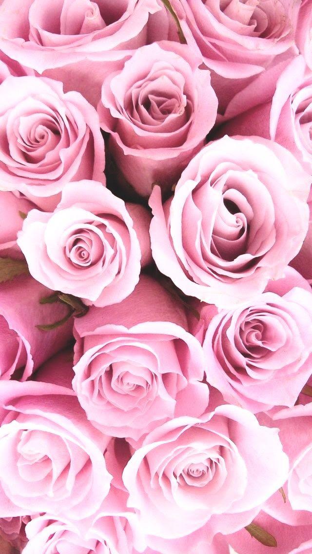 Fotos De Flores Blancas Tumblr